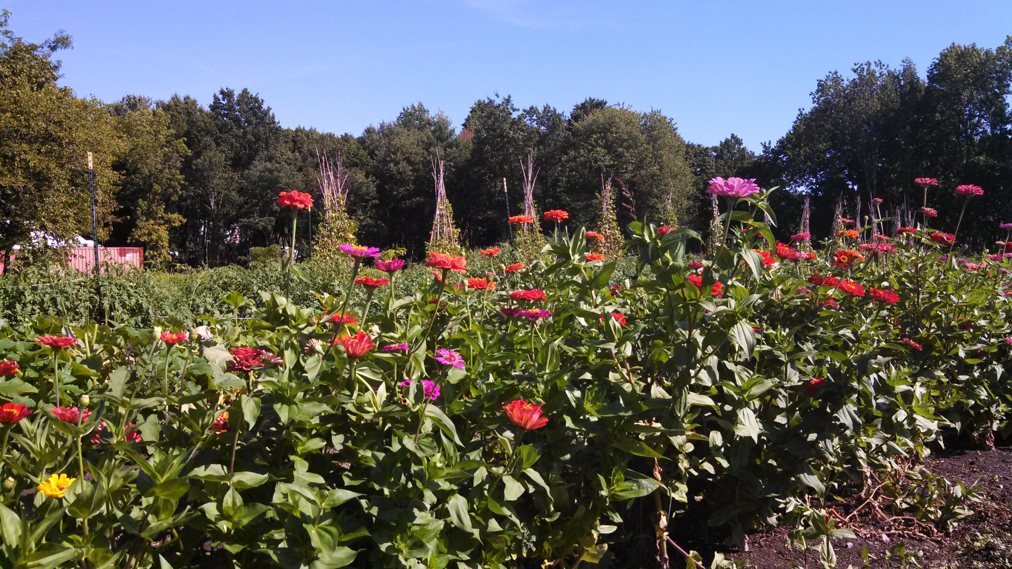 heritage farm photo by veronica hackethal - Staten Island Botanical Garden
