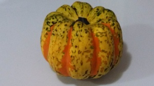Carnival Squash Photo by Veronica Hackethal